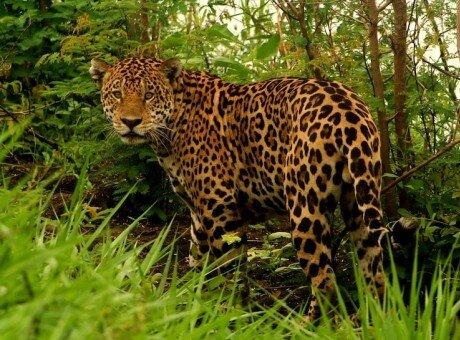 Pantanal Amazon