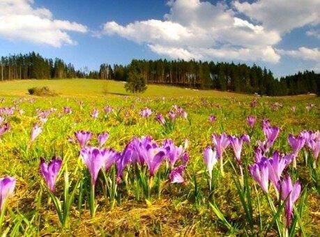 Tatra Meadow Trek
